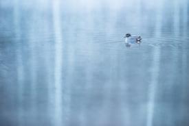 Teal in blue fog