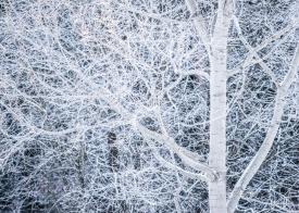 Frosty veins