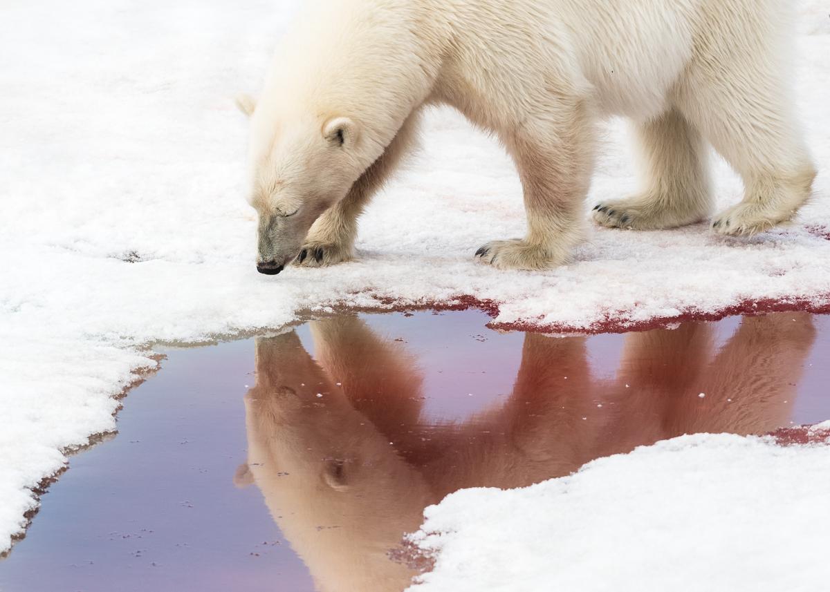 Blood reflection