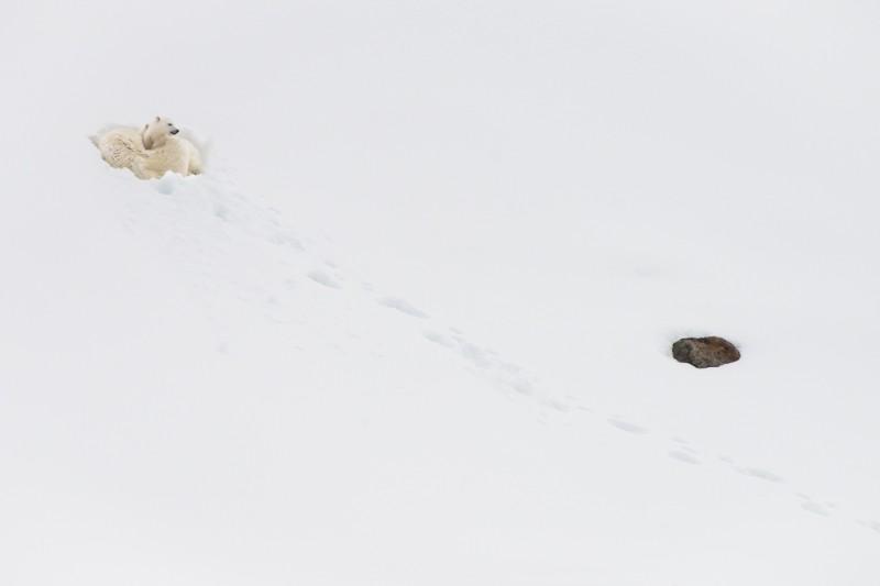 Mamma isbjörn och hennes två små, samlade i en varm pälsklump.