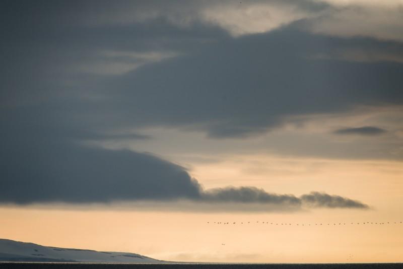 ... Snart såg vi hela pärlband av fåglar i fjärran.