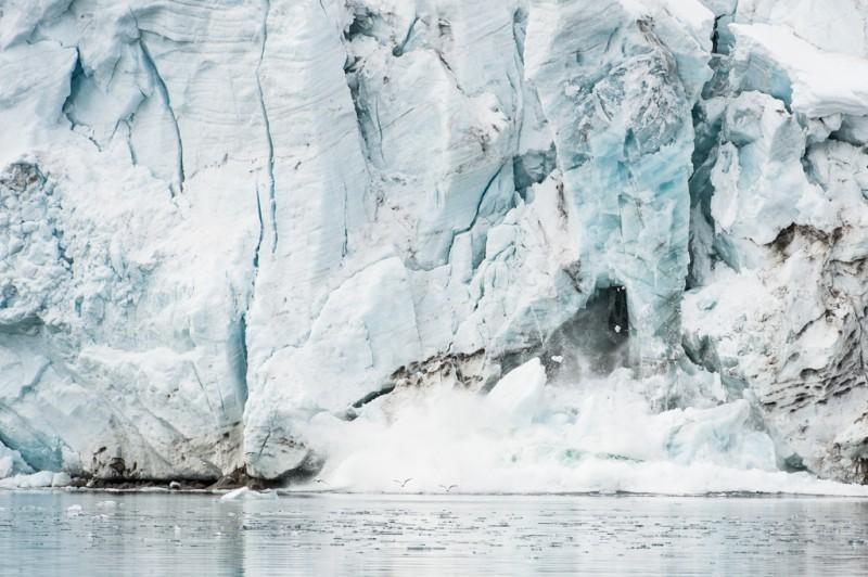 Glaciären kalvar, och några tretåiga måsar får lämna sin sittplats.