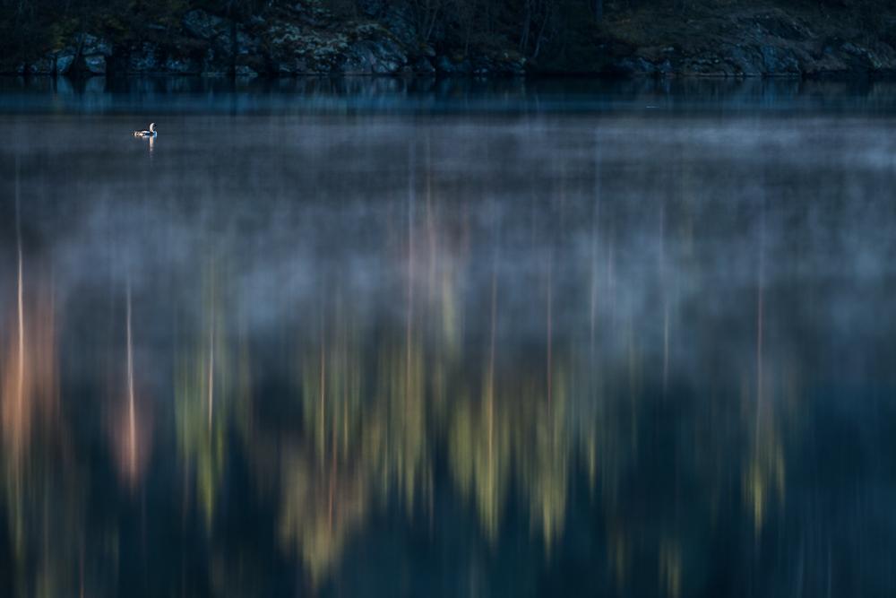 Diver on lake Delsjön