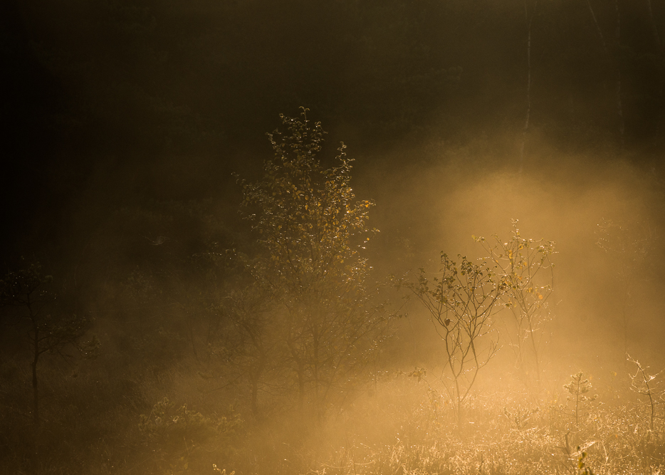 Fog on the moors