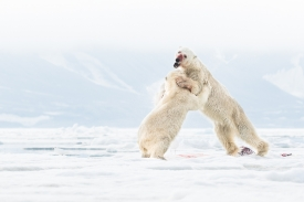 Clash of the arctic kings
